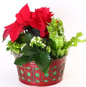 Christmas Combination Planter