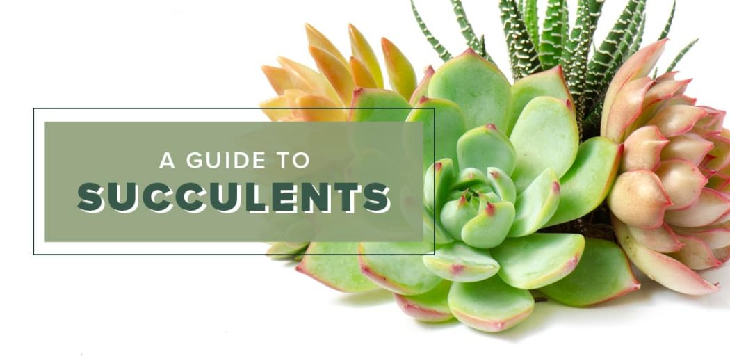 Lifestyle-Succulents-blog